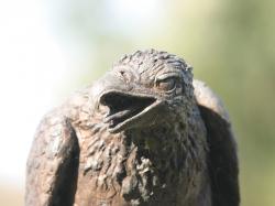 Fish eagle-I
