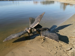 Seagull-II