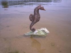 Seahorse-II